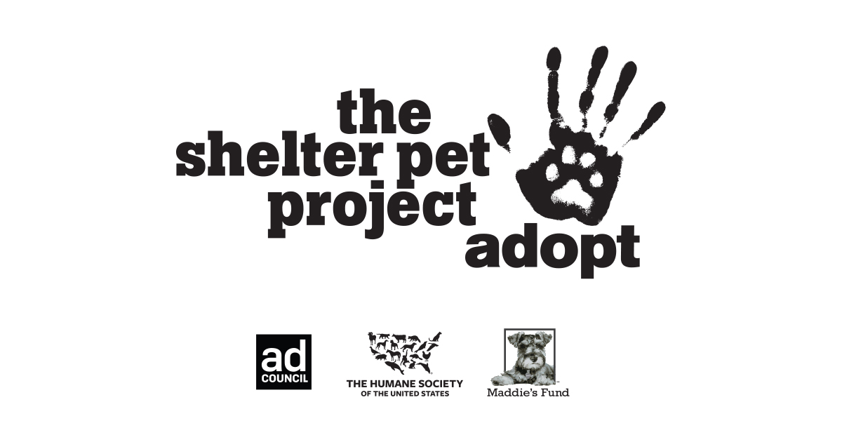 Pet Search | The Shelter Pet Project : The Shelter Pet Project